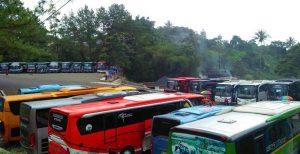 Sewa Bus ke Taman safari